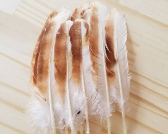 Chicken Feathers Cruelty Free Humane Naturally Molted Real Feathers #d13