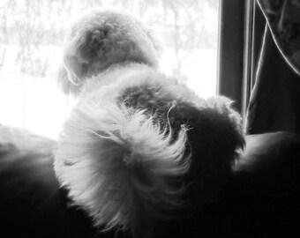 Henry en fenêtre - notecard - vacances, Thinking of You ou sympathie (perte de personne ou animal de compagnie)
