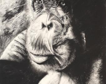 Lady Ape
