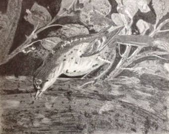 original pencil drawing of Pompeii bird (1)