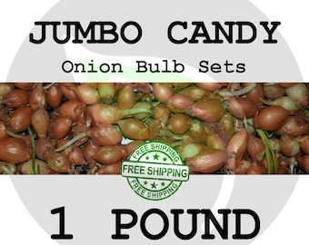 2018 Jumbo Yellow CANDY SWEET Onion Bulb Sets  - Large Seed Onions, Plant Start, Non-GMO - Free Shipping!