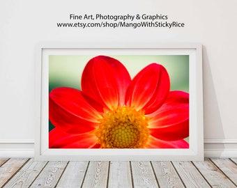 Flower Art Print, Red Poppy Print Wall Decor, Summer Decor, Red Flower Art Living Room Decor Digital Downlaod
