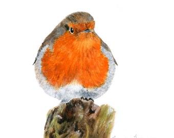 English Robin Giclee Print, birds of England, Robin print, Robin art, English Robin art, orange bird, songbird, small bird art, home decor