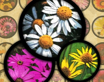 "Bright Daisies 1"" Bottlecap Rounds Digital Collage Sheet--Instant Download"