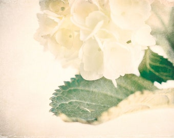 Hydrangea Wall Art - Flower Photography - Cottage Chic - Soft - Home Decor - Romantic