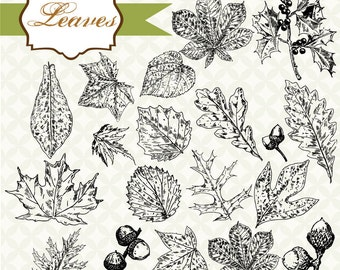 Vintage Leaves graphics, digital clip art and photoshop brushes: Commercial and Personal Use
