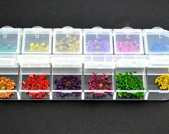 A box of natural dried flowers: 12 different colors