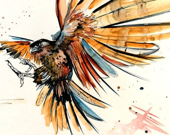 Karearea (NZ Falcon) Art Print