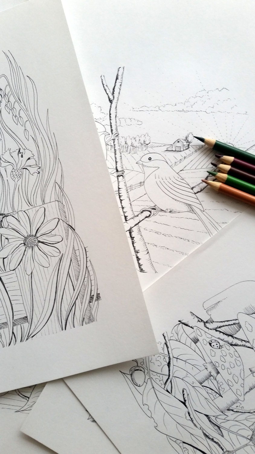 the Chickadee Coloring book the digital download printable