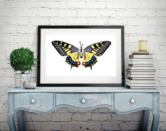 Butterfly original watercolor painting   A4