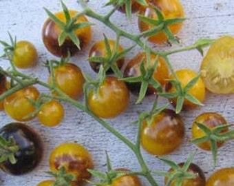 Tomato Plant, Cherry, Indigo Gold Berries