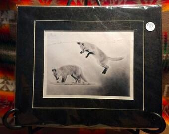 "Baby Fox Wildlife Pencil Fine Art ""Ambushed"" 10 x 12 Matte Print by Megan Stark"