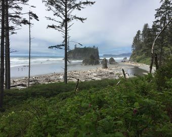 Ocean Meets Forest: Olympia State Park