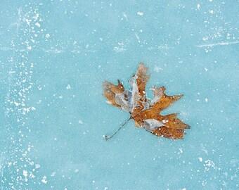 Frozen Leaf Nature Printable Digital Download Art Photograph Decor