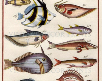 Antique Print of Tropical Reef Fish, 1764 Engraving of Various Colourful Fish. Engraved by J.V.Schley. Handcoloured in Watercolour