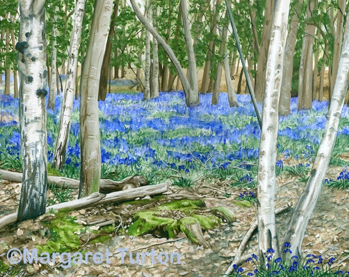 Featured listing image: The Bluebell Glade Print, mounted and signed