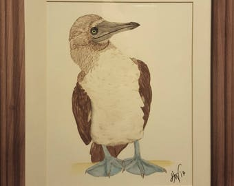 Watercolor Pencil Blue Footed Booby Painting Print