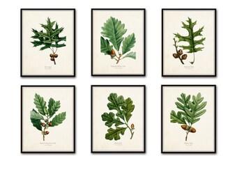 Oak Leaf Botanical Print Set No. 3, Botanical Prints, Antique Botanical, Vintage Botanical, Giclee, Illustration, Collage, Oak Leaf Prints
