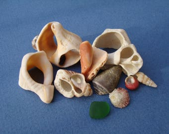 Decorative Sea Shell Shards-fragments of Mediterranean shells-supplies for Crafts-Jewelry Supply-Collectibles