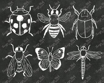 Hand Drawn Doodle insect Scrapbook Clipart, insect Photoshop Overlays, Hand Drawn Overlays,Digital Scrapbook, doodle insect Clipart