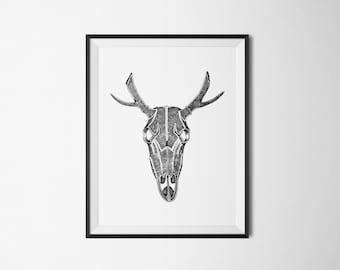 Art Print   Deer Skull
