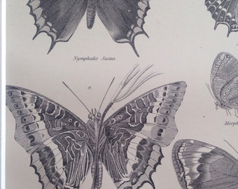 1875 Original Antique Butterfly print - Insects - Lepidoptera - Entomology wall decor - matted and ready to frame - 14 x 11 inches