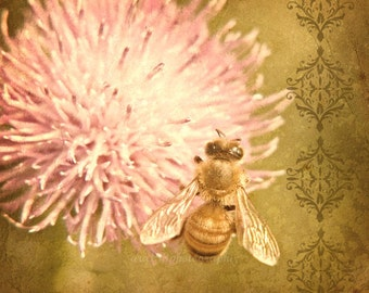 Garden Nature Photography Honey Bee Home Decor Gold Pink Flower Bee Photo Flower Gardeners Under 25 - 5x5 inch Fine Art Print Hymenoptera