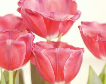 Floral picture for girls room print, tulip photography white red flower artwork, fine art photo print 16x20 bedroom wall art, gift for women