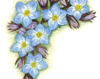 Forget-Me-Not Watercolour Print 4x6""