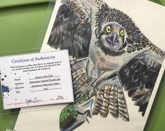 Osprey with a Fish Bird of Prey - Art Print and Original Drawing