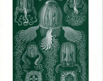 1899 Ernst Haeckel Print Cubomedusae Jellyfish Poisonous Sea Life 1st Ed Lithograph Plate 78 Haeckel Art