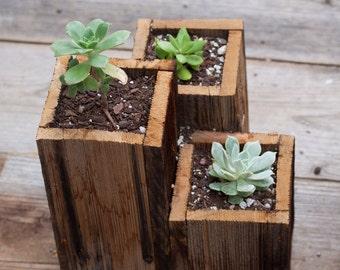 Succulent Planter Table Center Pieces