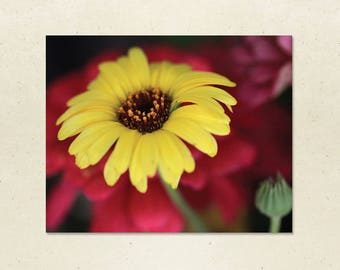 Art Print – Yellow Daisy, 10x8 Flower Wall Art, Daisy Photograph, Framed or Unframed