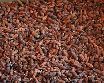 1 Pound Birch Pine Cones, unscented, Potpourri,  bowl filler, dried botanical, fall decor, Halloween, Bulk Birch Pine cones, Bulk Cones