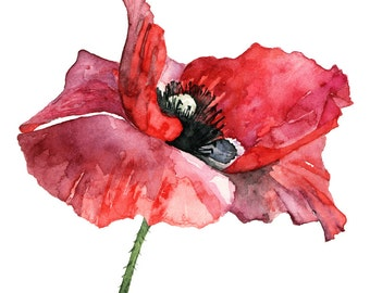 Watercolor poppy bunch 8 x 10 print watercolor red poppy painting print from my original watercolor painting dressed in red mightylinksfo