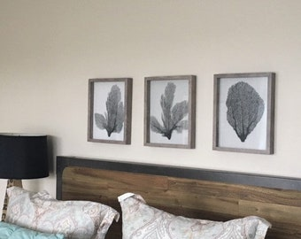 3 Framed Sea Fans, Charcoal Gray