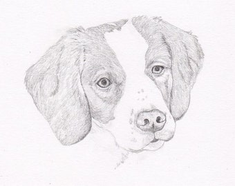 Brittany Spaniel Signed Personalized Original Pencil Drawing Double Matted Print -Free Shipping- Desert Impressions