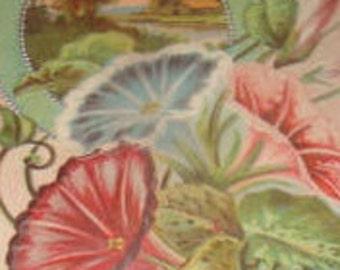 Nice Floral/Sceanic Vintage Postcard