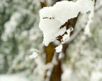 L'hiver #16 Frozen Tree Branch in Snow Scenic Winter Photograph
