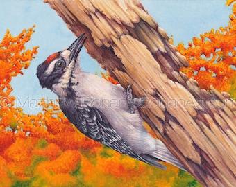 ORIGINAL Watercolor Painting of Juvenile Hairy Woodpecker, Bird Painting, Bird Art, Wall Art, Home Decor, Wildlife, Nature, FREE SHIPPING