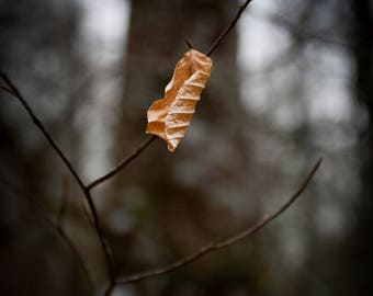 The Last Leaf of Fall