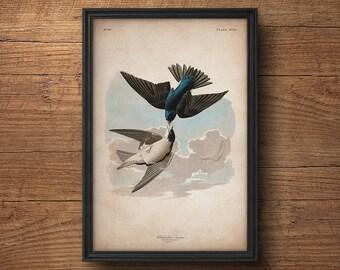 Audubon bird print, Swallow print, Antique bird print, Audubon poster, Birds of America, John James Audubon, Wall art, Wall decor, Large art