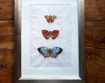 Butterfly Painting, Pastel , Original Art, Framed art, butterflies, Modern art