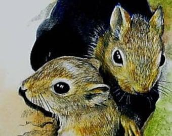 Baby Squirrels Wildlife Art Melody Lea Lamb ACEO Print