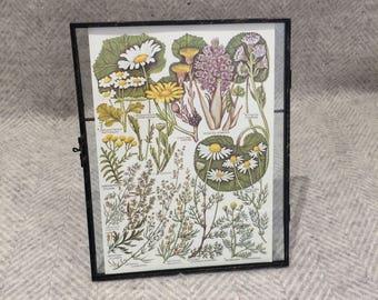 Vintage framed botanical drawing, vintage botanical flower illustrations, botanical prints, floral, in glass frame, purple and green daisies