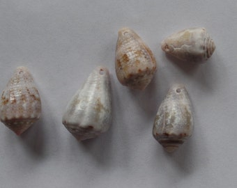 Natural Sea Shells with Holes for Jewelry Making/Crafting