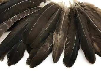 Turkey Wing, 6 Pieces - Natural Brown Wild Turkey Rounds Secondary Wing Quill Feathers : 4453