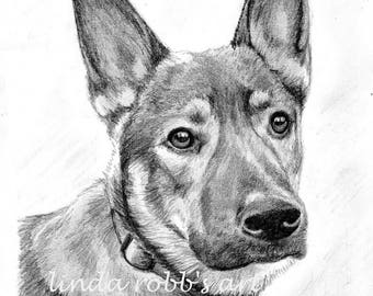Custom Dog Pet Portrait Pencil 8x10 graphite pencil