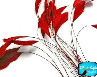 Stripped Feathers, 1 Dozen - RED Stripped Coque Tail Feathers: 318