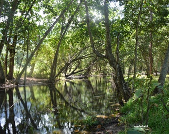 Tropical Landscape Art Print, Digital Download Tropical Landscape Photography, Rainforest Photography, Printable Photography